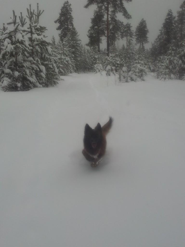 Rumba plöjer fram som vanligt utan tanke på snömängd.