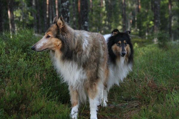 Tifa och Kiros tycker att matte är tråkig när hon stannar för att fota