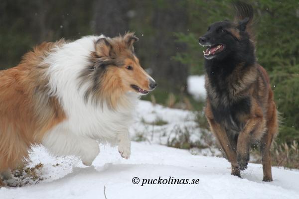 Amos och Rumba