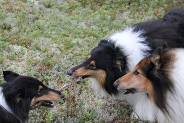 Hetsa och Kiros leker under Rex bevakning